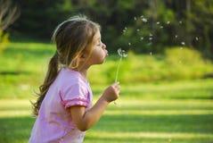 Dandelion fundindo da menina imagens de stock royalty free