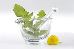 Dandelion in glass mortar Stock Images