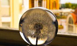 Dandelion in a globe stock images