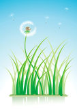 Dandelion and grass Stock Image