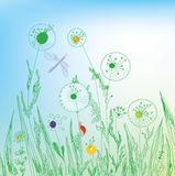 Dandelion and grass field. Background Stock Photos