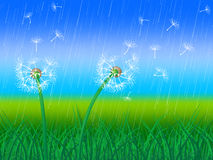 Dandelion Grass Shows Sky Flower And Environment Royalty Free Stock Images