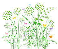 Dandelion and grasses. With butterflies isolated on white Royalty Free Stock Images