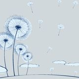 Dandelion on gray Stock Image