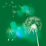 Dandelion on green background royalty free illustration