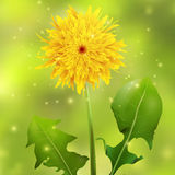 Dandelion on a green blurred background with sparkles Royalty Free Stock Images
