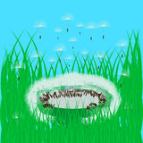 Dandelion in the green grass Stock Photography