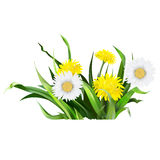 Dandelion, green grass, yellow flower illustration,  det Stock Images