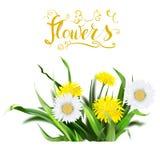dandelion, green grass, yellow flower illustration, isolated det Stock Photos