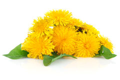 Dandelion with green leaves Stock Images