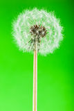 Dandelion on green vertical Stock Photos