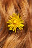 Dandelion in hair Stock Photo