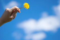 Dandelion in a hand. Against the sky Royalty Free Stock Image