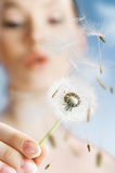 Dandelion in hand Royalty Free Stock Photo