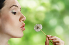 Dandelion in hand Stock Photography