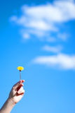 Dandelion in a hand Stock Image