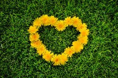Dandelion heart on a grass. Heart dandelion's symbol is mean love Stock Photography