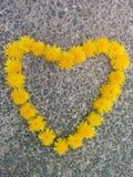 Dandelion heart Royalty Free Stock Photos