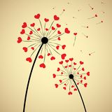 Dandelion with hearts Royalty Free Stock Photo