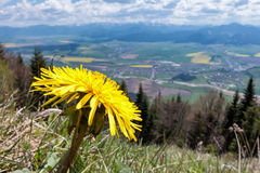 Dandelion on hill Stock Images