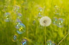Dandelion i mydlani bąble Zdjęcia Stock