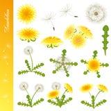 Dandelion icons set. Illustration Stock Photography