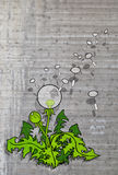 Dandelion illustration Stock Photos