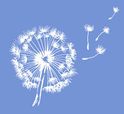Dandelion  illustration Royalty Free Stock Photography