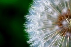 Dandelion 2. Image with a fractal processing Royalty Free Stock Images