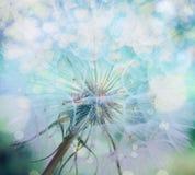 Dandelion inside, makro- fotografia Obraz Royalty Free