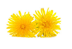 Dandelion. Isolated over white background royalty free stock photos