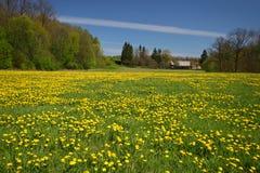 dandelion końcówki gospodarstwa rolnego domu łąka Obrazy Royalty Free