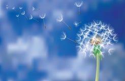 dandelion komarnica ilustracja wektor