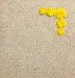 dandelion kwiatów piaska tekstura Fotografia Stock