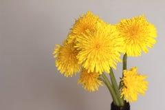 Dandelion kwiat na d?ugim trzonie na zamazanym tle na ??ce fotografia royalty free