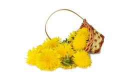 Dandelion kwiaty Obrazy Royalty Free