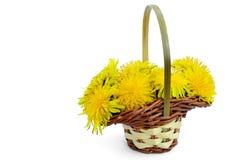 Dandelion kwiaty Zdjęcia Royalty Free