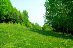 dandelion kwitnie drzewa Fotografia Royalty Free
