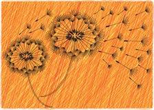 Dandelion kwitnie tło Obraz Royalty Free