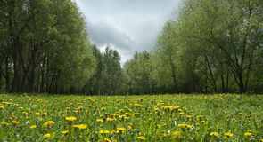 Dandelion landscape. With trees sky an sun vanishing behind clouds royalty free stock images