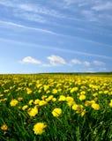 Dandelion landscape Royalty Free Stock Photo