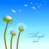 dandelion last3 Royalty Ilustracja