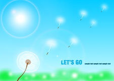 dandelion latanie Obraz Stock