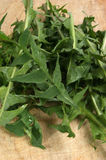 Dandelion leaves prepared for a salad Royalty Free Stock Images
