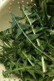 Dandelion leaves prepared for a salad Stock Images