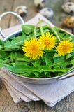 Dandelion leaves and quail eggs for vegetarian salads Stock Photography