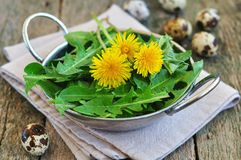 Dandelion leaves and quail eggs for vegetarian salads.  selective focus Stock Photography