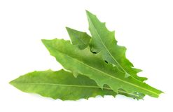 Dandelion leaves salad Royalty Free Stock Images