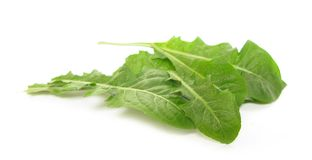 Dandelion leaves salad. The common name Dandelion is given to species of the genus Taraxacum, a large genus of flowering plants in the family Asteraceae stock image