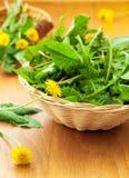 Dandelion leaves. Salad with fresh dandelion leaves Royalty Free Stock Image